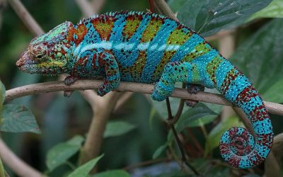 Highly Sensitive People, People-Pleasing, and Chameleon Syndrome